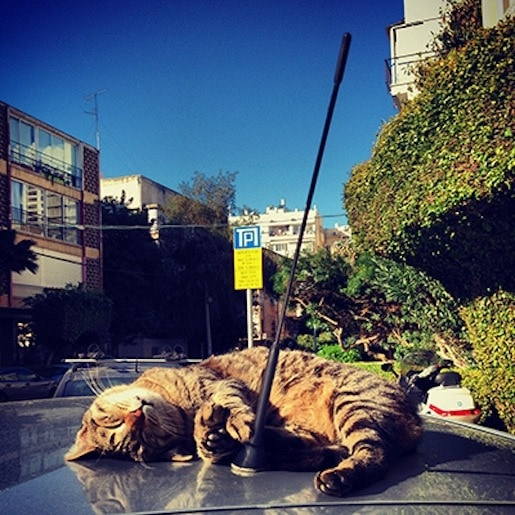 Pics - sleepy-tel-aviv-cat - Natie Branding Agency